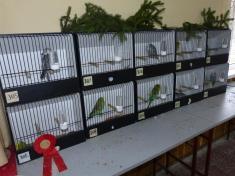XXV. klubová výstava kanárů aexotického ptactva